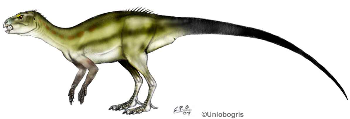 Abrictosaurus consors 03a by unlobogris cc