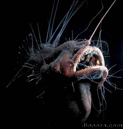 Abyssal Deep sea fish 02 cc