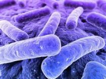 типичные бактерии