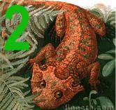 Lanthanosuchoidea