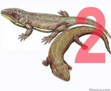 Nycteroleteridae 2