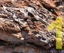 Pilbara stromatolite